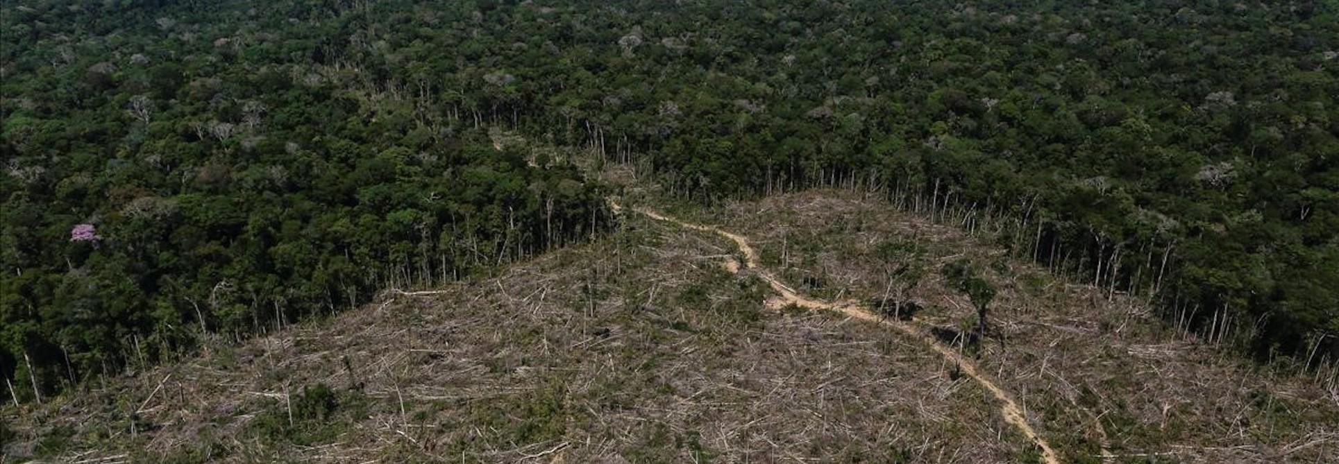 The Amazon in danger