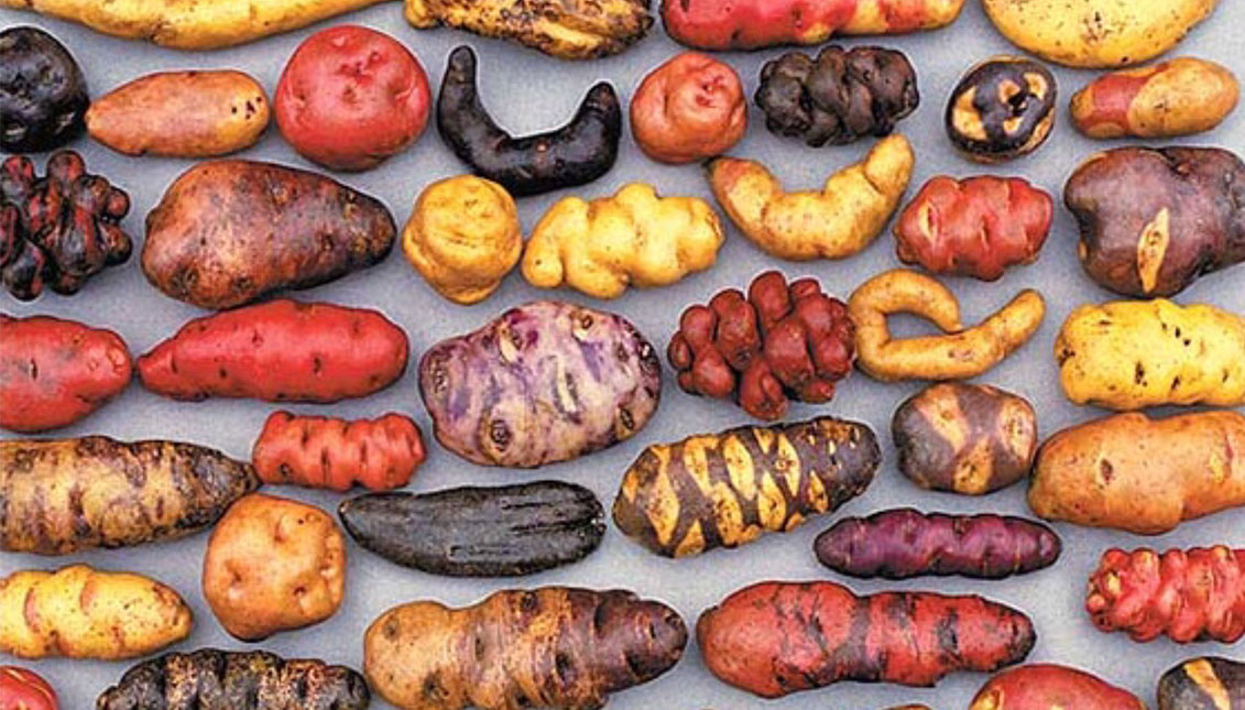 El Parque de la Papa alberga más de 1.300 variedades de patatas.