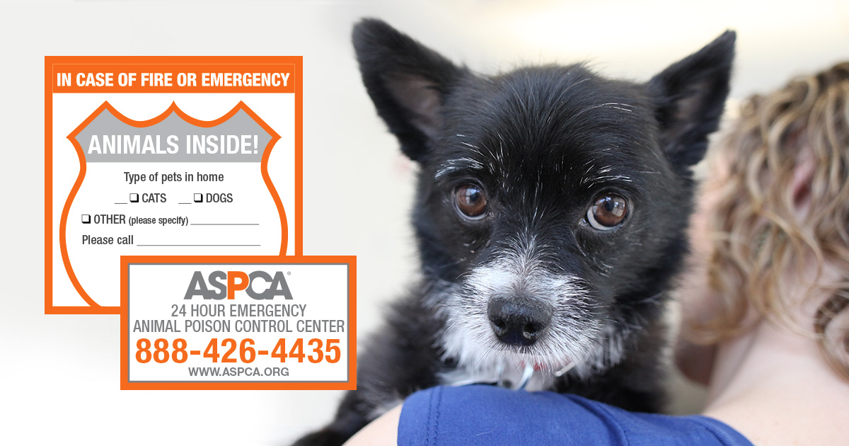 ASPCA sticker to identify how many pets in your house should be rescue. Photo: ASPCA