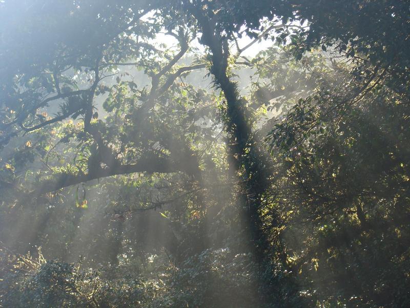 Amanecer en la reserva Bosque Eterno de los Niños en Costa Rica. Foto: BEN