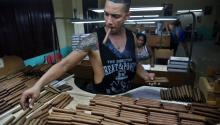 A worker at a tobacco factory in Havana, Cuba. EFE/Alejandro Ernesto