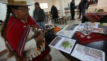 A photograph showing Trigidia Gimenez, considered the largest producer of cañahua in Bolivia, explaining the grain's benefits in the city of El Alto, Bolivia, on Sept. 14, 2017. EFE/Martin Alipaz