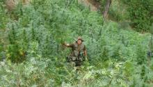 An undated handout picture provided by Peru's National Police shows an operative during an eradication of a marijuana field in the Huanuco region, Peru. EPA-EFE FILE/Policia Nacional de Perú