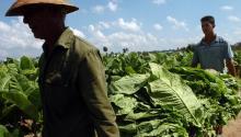 """El porcentaje de trabajadores indocumentados """"disminuyó de 55 % a 47 % entre 2000 y 2014"""", aseguró el informe reseñado este jueves por el Instituto de Política Migratoria (MPI). EFE"""