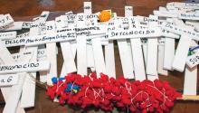 Cruces que representan a inmigrantes fallecidos en el desierto de Arizona y que son usadas durante una caminata que se celebra hace 15 años para conmemorarlos. EFE