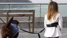 Rita, una perra de asistencia color chocolate, es desde el pasado 22 de diciembre la nueva integrante de la familia de la pequeña Saoia Garrido, una niña de tres años diagnosticada deautismoa la que tratará de ayudar y mejorar su calidad de vida. EFE/Javier Etxezarreta.