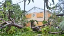Vista de un árbol caídoel díadomingo 10 de septiembre de 2017, luego del paso delhuracánIrmapor Miami, Florida (Estados Unidos). EFE/Álvaro Blanco