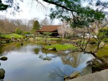 The Shofuso Japanese house consists of a koi pond and island, a tea garden, and a courtyard garden comprise the 17th century-style Japanese walled and fenced garden of this historic site and museum.  Photo: Peter Fitzpatrick/AL DIA News