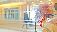 El robot es capaz de diagnosticardesórdenes neurológicos. Foto: Jesse Orrico