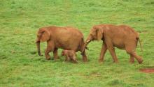 Los elefantesson uno de los mayores atractivos del parque. Foto: Richard Leeming (CCC)