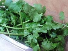 La FDA prohíbe la importación de cilantro procedente del estado mexicano de Puebla