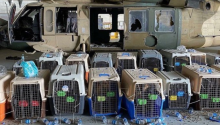 Forgotten dogs at Kabul airport. Photo: Twitter @perezreverte