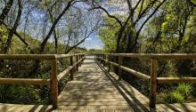 Doñanaes unode los parquesnacionalesmásbellos de España. Foto: Alfcermed
