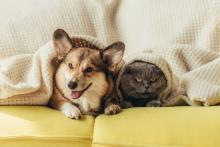 Pet safety during Hurricane season: What you should know on how to protect your cat and dog.