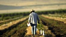 Photo: A farm worker is pictured in a field in Arvin, southeast of Bakersfield, California. David McNew/Getty Images