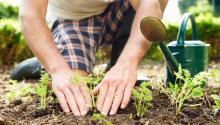 NSCA busca voluntarios para concluir jardín de cultivo para niños de Norris Square