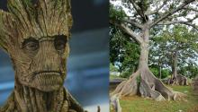 Un hombre-árbol con tantas anillas en su tronco como la historia de la humanidad. Photo: Wikipedia