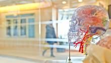 En Estados Unidos los infartos cerebrales ocupan la quinta causa de fallecimientos, pero la poblacióntodavía desconoce este problema. Foto: Jesse Orrico