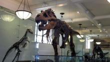 Interior del Museo de Historia Natural de Nueva York, un museo dedicado a la divulgación de conocimiento científico sobre la naturaleza y el ser humano. Foto: Foreign Press Centers - Department of State