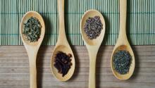 Las plantas medicinales pueden darte un aporte de energía extra. Foto: Miguel Á. Padriñán