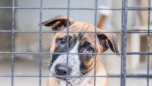 The Philadelphia No-Kill Coalition is working to ensure all healthy and treatable cats and dogs in the city are guaranteed a home.